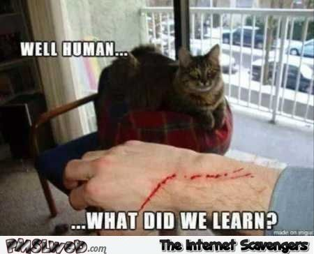 Collect the Luxury Funny Cat Memes Hump Day