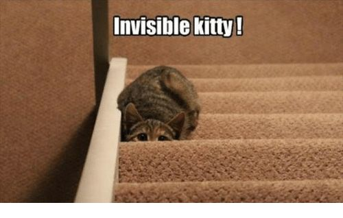 Kitties Memes and 🤖 Invisible kitty