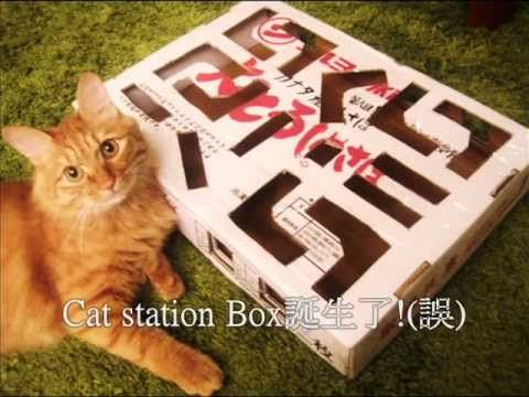 Cat Station Box D I Y Cat s Funny Toy