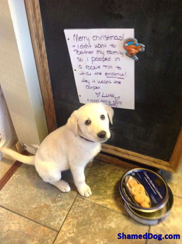 jan 5 Dog Shaming Dog Guilty Dog Funny