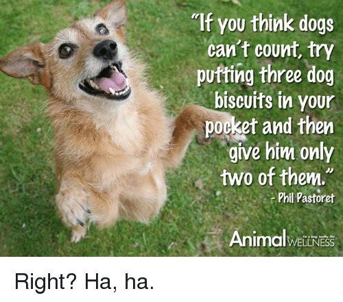 Animals Anime and Dogs MIf OU think dogs can t count