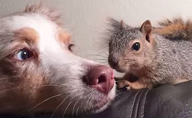 Daily Cute Dog Befriends Rescued Squirrel