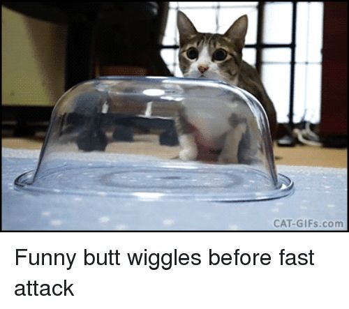 Butt Funny and Gifs CAT GIFs Funny butt wiggles before
