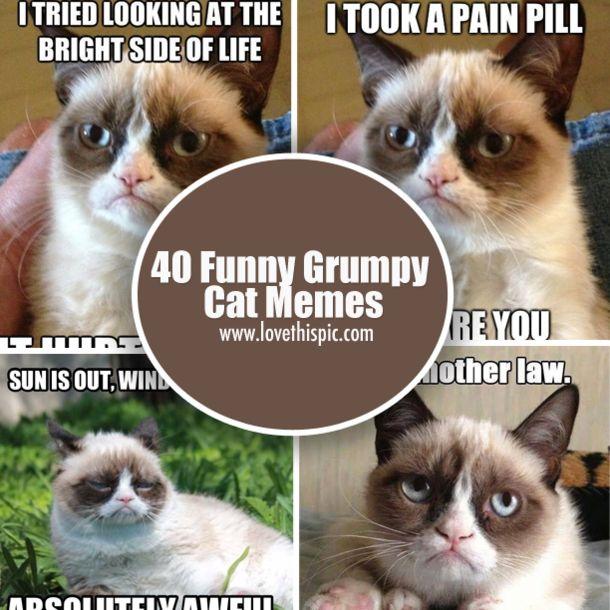 40 Funny Grumpy Cat Memes via Relatably