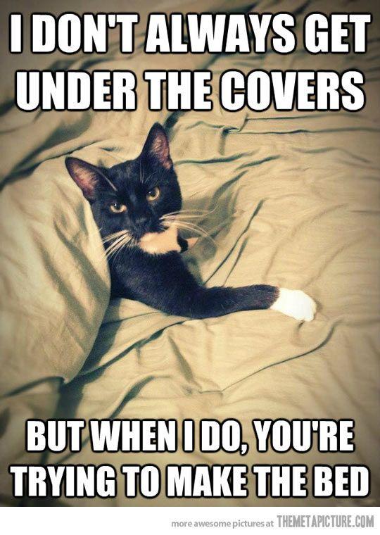 Cats are definitely jerks…