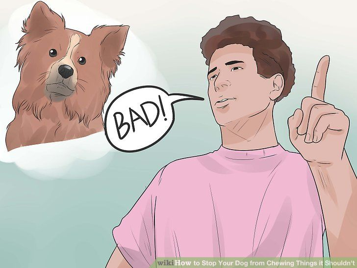 Image titled Stop Your Dog from Chewing Things it Shouldn t Step 2