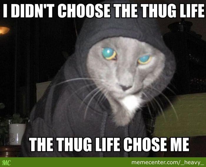 Watch Out Yo He s Got A Gangsta Soul