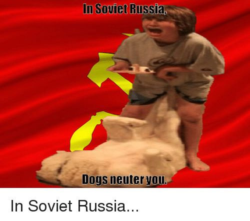 Dogs Russia and Soviet In Soviet Russia Dogs neuter Vou In Soviet