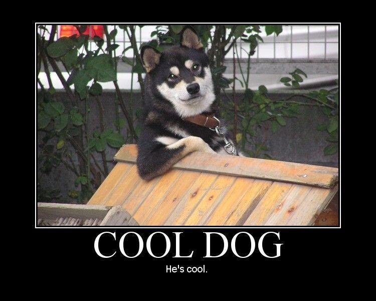 cool dog meme