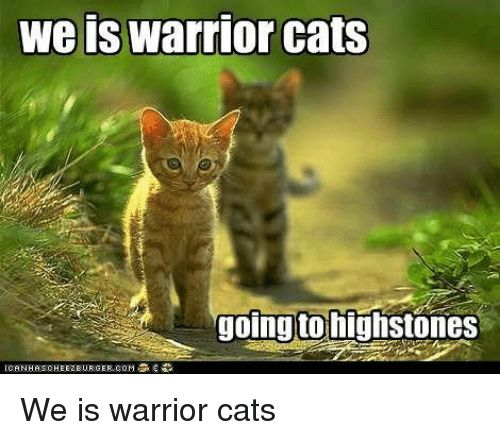 Cats Warrior Cats and Warrior we is warrior cats going to highstones IORNHAS CHEEZBURGER GOM O