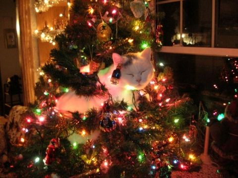 Very Creative and Funny Christmas Cat Humor