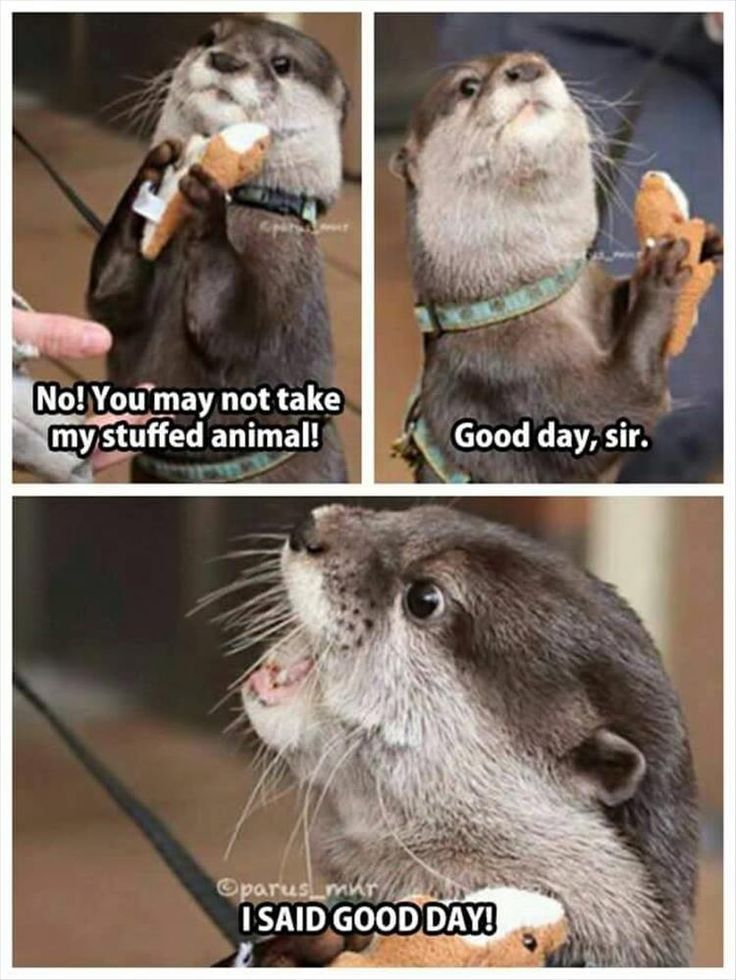 We love our pets and we do entertained sometimes by the funny things they do so here are some funniest Animals memes and pictures hope you will enjoy