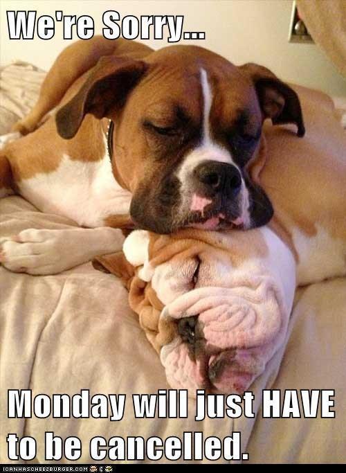 Cat Memes Mondays It s Monday