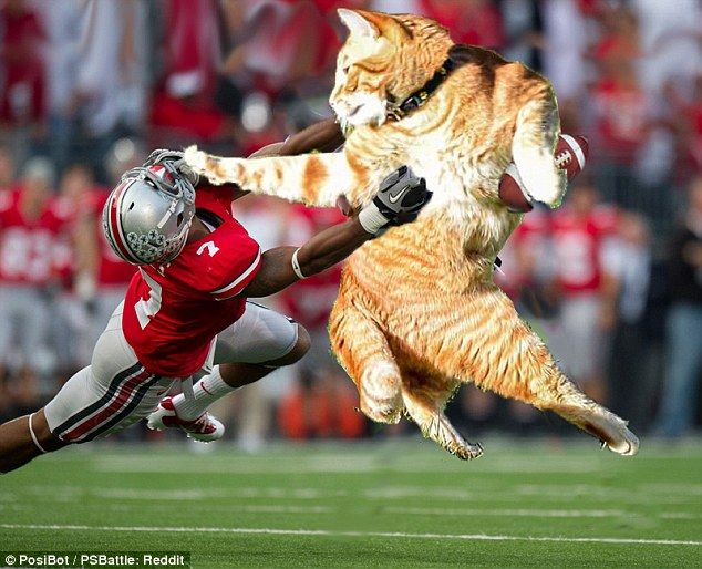 Collect the New Funny Cat Football Pictures
