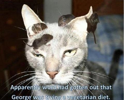 Funny ve arian cat
