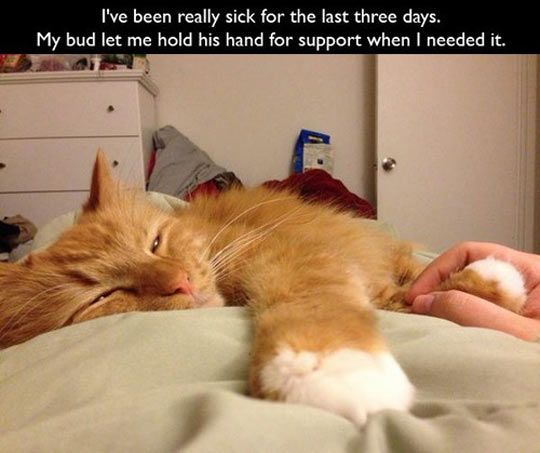 Collect the New Funny Cat Sick Pictures
