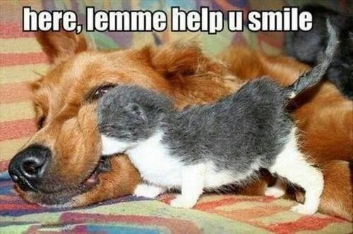 animal memes help you smile funny memes on we heart it