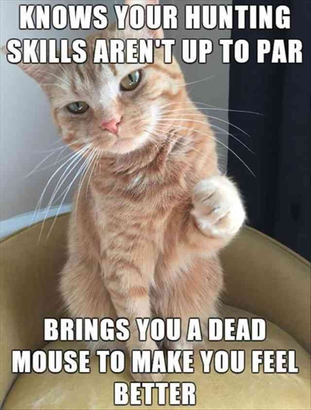 Sphynx cat Kitten Mouse Dog Grumpy Cat Funny animal Humour
