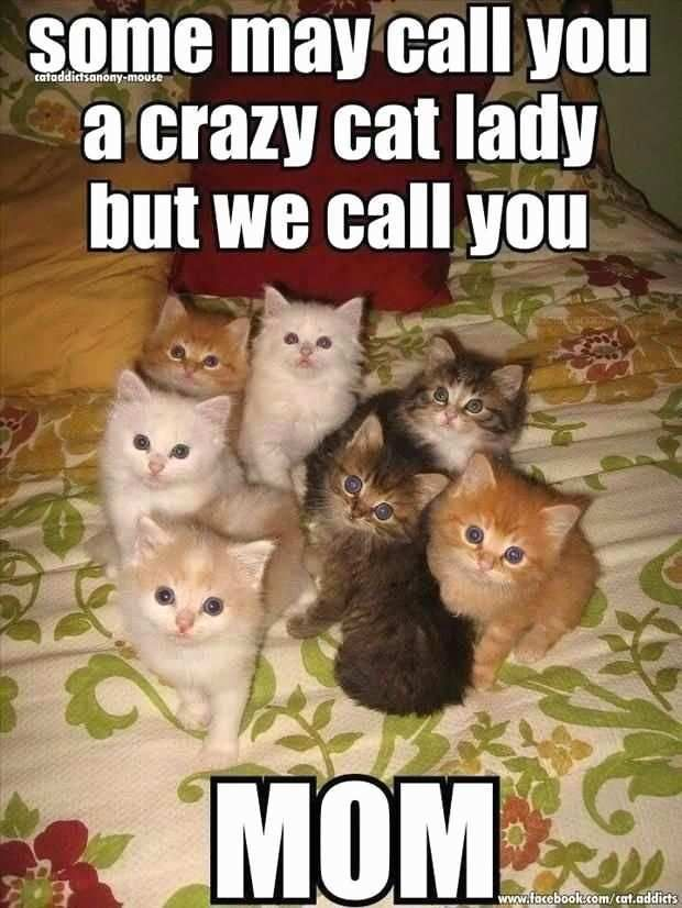 Crazy Cat Lady Birthday Meme Inspirational 40 Very Funny Cat Meme and