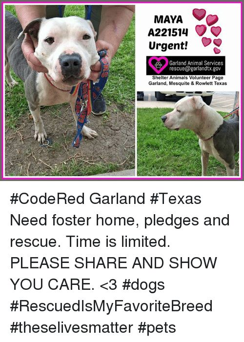 Animals Dogs and Memes MAYA A Urgent Garland Animal Services rescue