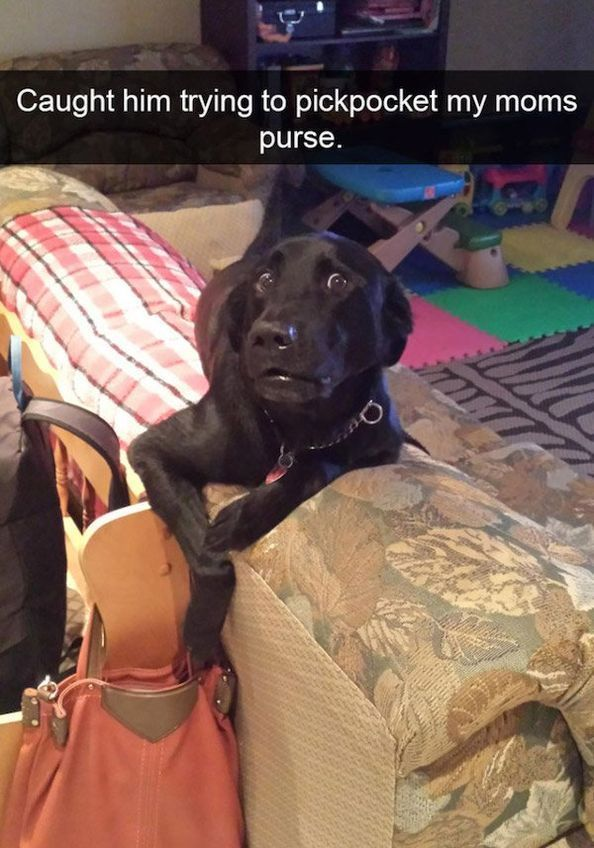 SnapDogs – 30 Funny Dog of Snapchat