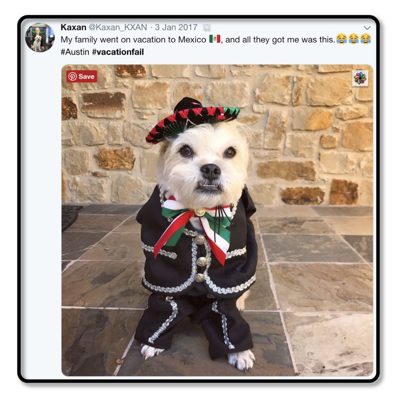 Collect the Prodigious Funny Dog Pictures 2015
