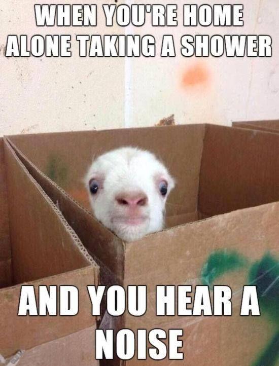 Hear A Noise