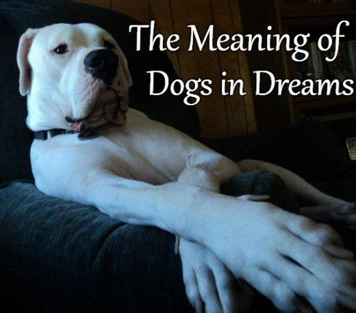 Oisin will guide you to your dog dream s meaning