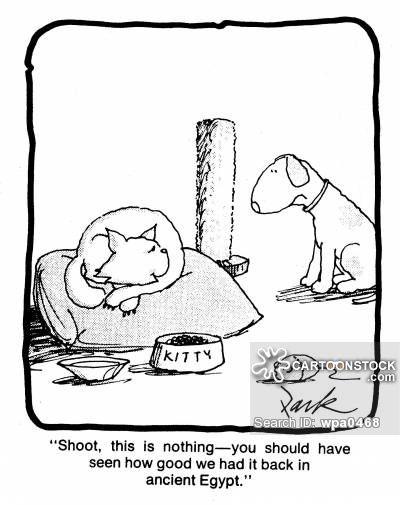 Dogs Vs Cats cartoon 16 of 99