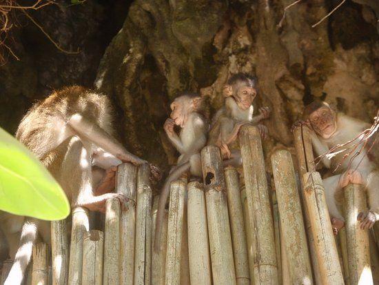 Krua Phranang Rayavadee Resort So cute and funny monkey