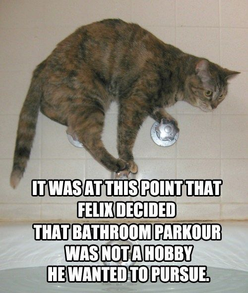 Cat Memes 25 Ways To Laugh