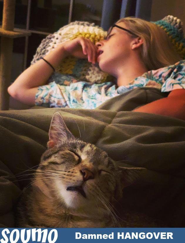 Girlies Hangover Dreams Funny Animals ♡ Pinterest