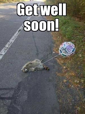 Get well soon Raccoon well so on Twitpic