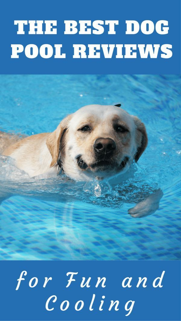 In hot weather many dogs like to take a dip Labradors Well in any and all weather Find here some great value well featured pools for your pooch