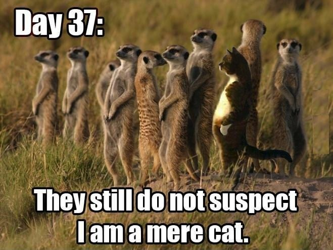 For more funny animal sayings and humorous animals visit