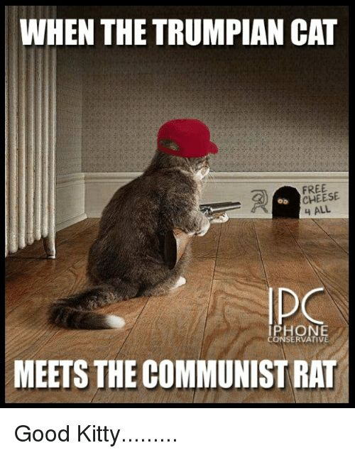 Memes Free and Good WHEN THE TRUMPIAN CAT FREE CHEESE 4 ALL OD