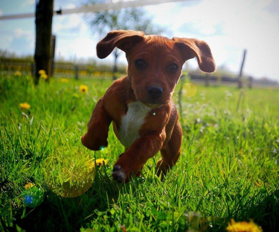 Happy Dogs Animal Wallpaper Cute Dog Wallpaper Hd Wallpaper Champs Super