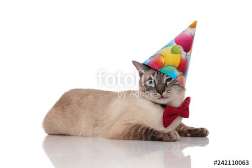 """three funny birthday cats with colorful caps looking bored"" Stock photo and royalty free images on Fotolia Pic"