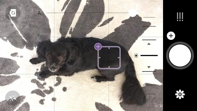 Before picture of black dog on Camera 1 photo editing app