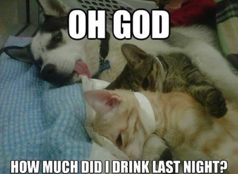 10 hilarious memes of the relationship between cats and dogs