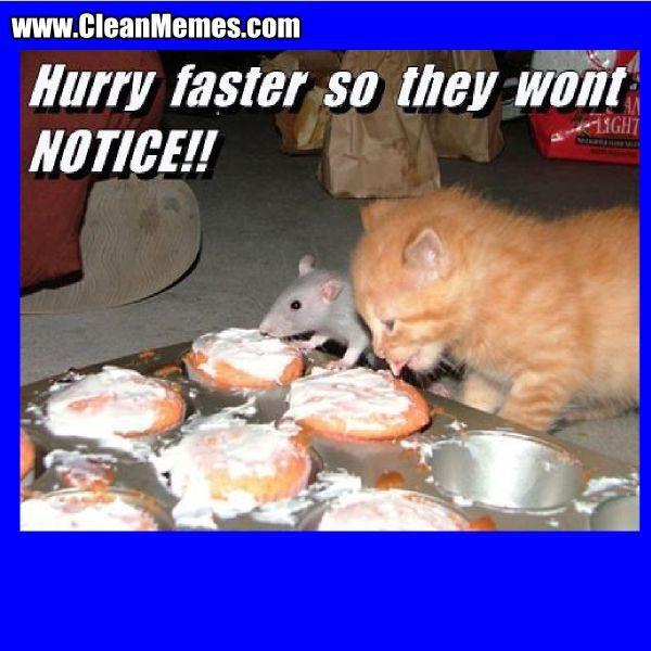 funny cat memes 2015 Google Search