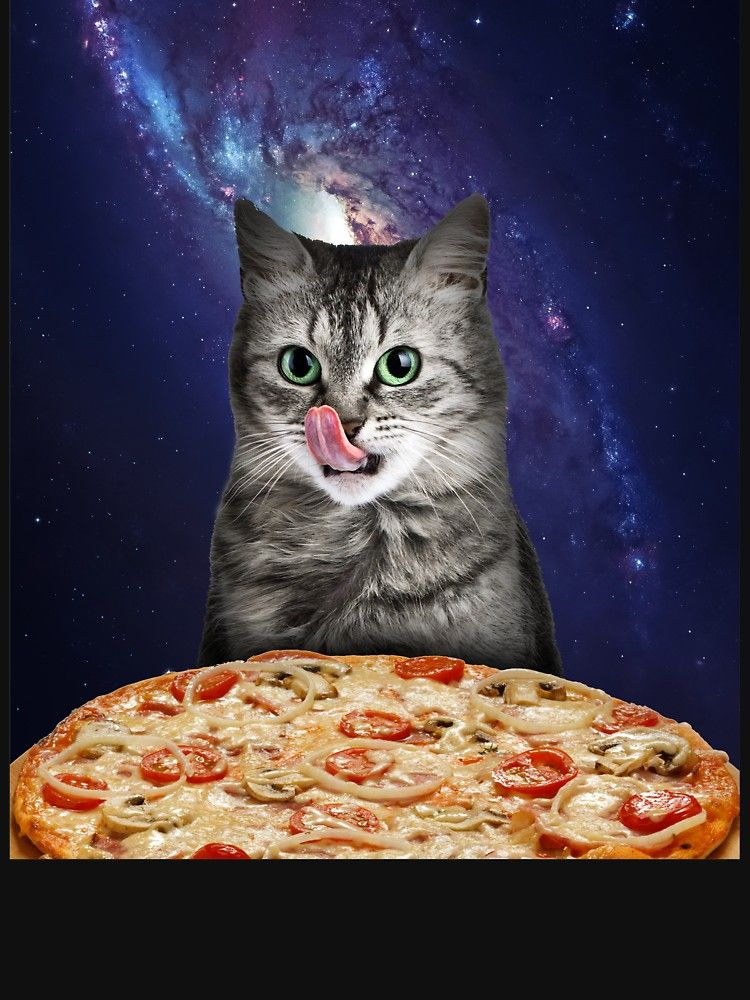 Collect the Unbelievable Funny Cat with Pizza Pictures
