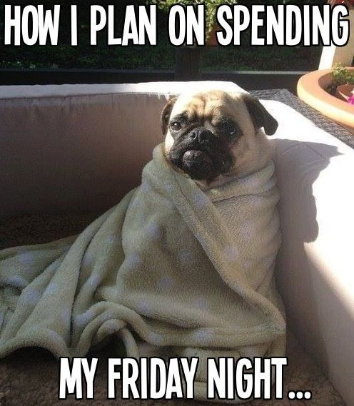 How I Spend Friday Nights funny cute animals winter adorable dog friday pug friday quotes