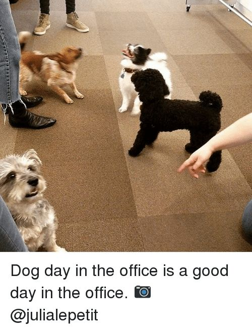 Collect the Unbelievable Funny Office Dog Pictures