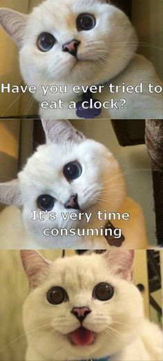 Funny Animal The Day – 23 Pics
