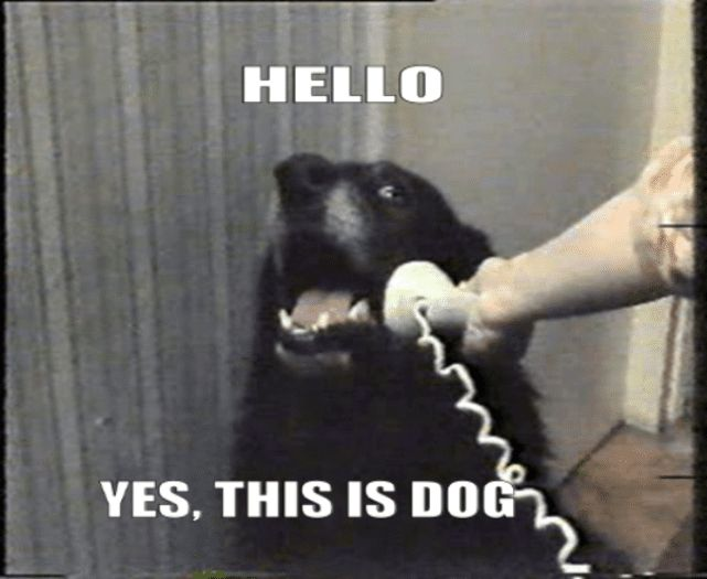 """Hello This Is Dog"""