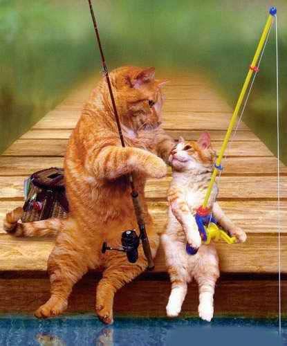 Funny Cat s Fishing