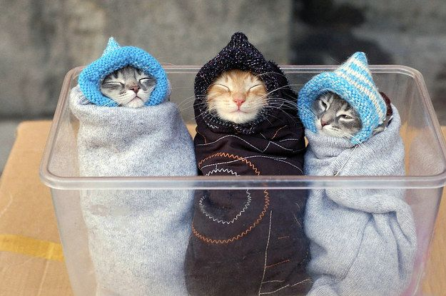 39 overly adorable kittens to brighten your day 2 1 dblbig