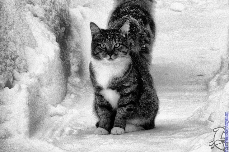 Big Cute Cat