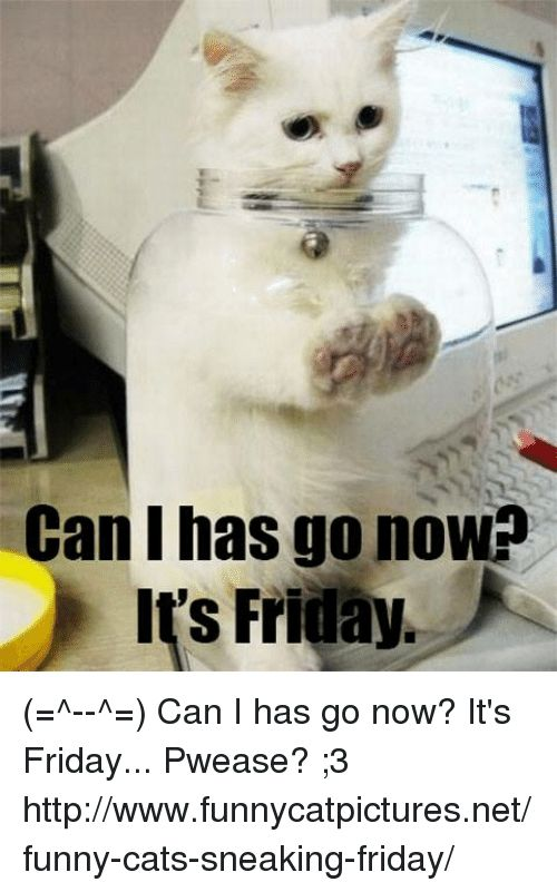 Friday It s Friday and Memes Can I has go now Its Friday